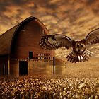 Barn Owl by Cliff Vestergaard