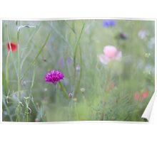 Poppies and Cornflowers Poster