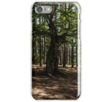 Surrounded - an Ancient Beech Tree in a Pine Forest iPhone Case/Skin