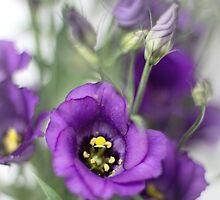 A purple dream... by Bob Daalder
