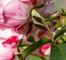 Bouquet. Roses Sticker