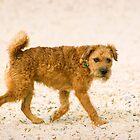 Terrier on the Beach by Kawka