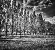 Trees by Nigel Bangert