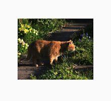 Ginger cat on garden path Unisex T-Shirt