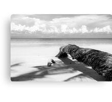 Fallen palm tree in black and white Canvas Print