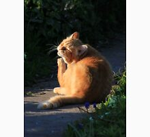 Ginger cat in garden at evening time Unisex T-Shirt
