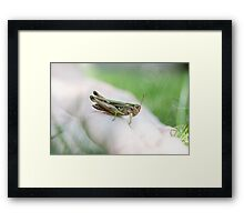 Quickly Framed Print