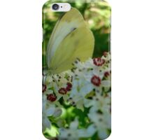 White butterfly iPhone Case/Skin