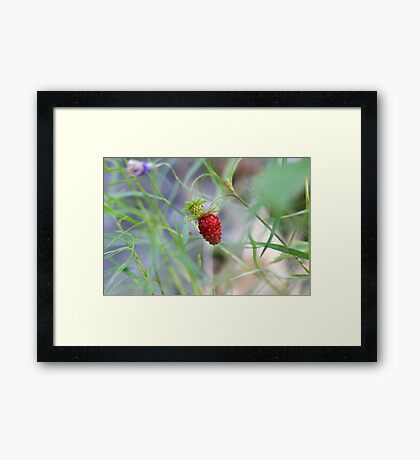 Lone Berry Framed Print