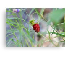 Lone Berry Canvas Print
