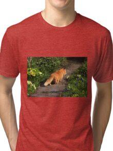 Ginger cat hunting on garden path Tri-blend T-Shirt