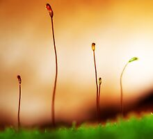 dreamland moss by Manon Boily