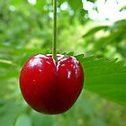 Juicy Red Cherry by Sue Gurney