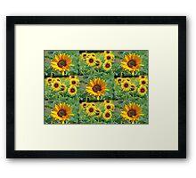 Sunflowers on a Field Framed Print