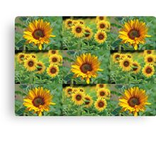 Sunflowers on a Field Canvas Print