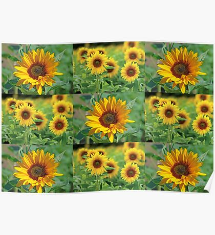 Sunflowers on a Field Poster