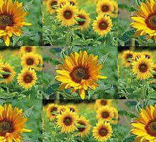 Sunflowers on a Field by giftshaper
