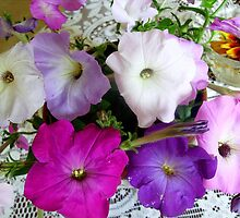 Colorful petunias by Ana Belaj