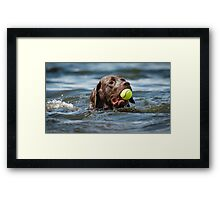 Retrieving a tennis ball Framed Print