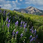 Mountain Lupines by Sue  Cullumber