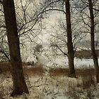 The Frozen Marsh by Sarah Jarrett