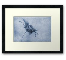 Faded beauty cyanotype Framed Print