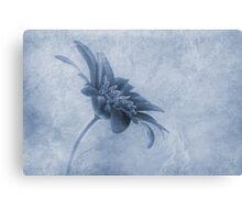 Faded beauty cyanotype Canvas Print
