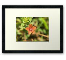 Tiny Orange Flower Framed Print