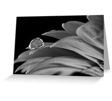 Water drop balanced on a petal Greeting Card