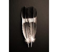 Two Feathers Photographic Print