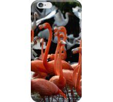 Dance of the Flamingo iPhone Case/Skin