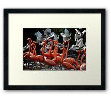 Dance of the Flamingo Framed Print