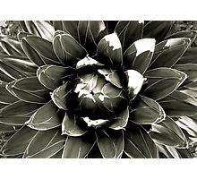 Desert Study 13  Photographic Print