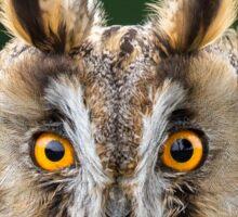 Long Eared Owl 1 Sticker