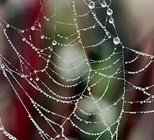 Dewy Spider Web by Keala