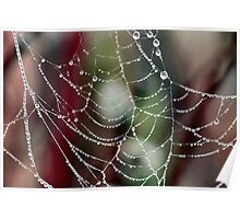 Dewy Spider Web Poster