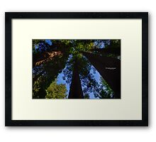 a look to the canopy Framed Print