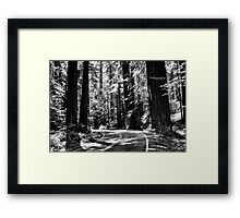 Avenue of the Giants - monochrome Framed Print