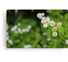Floral flowers Canvas Print