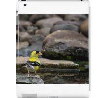 Male American Goldfinch iPad Case/Skin