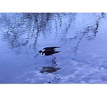 oiseaux Photographic Print