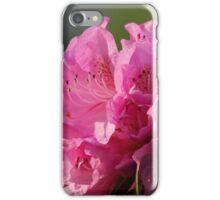 Pink Azaleas iPhone Case/Skin