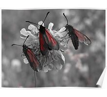 Red and gray photo of insects on a flower Poster