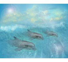 Dolphin Dreams Photographic Print