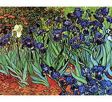 'Blue Irises' by Vincent Van Gogh (Reproduction) Photographic Print