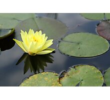 Another Water Lily Photographic Print