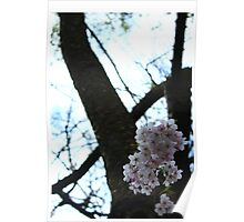 Blossoming Tree  Poster