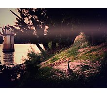 By the river  Photographic Print