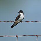 Eastern Kingbird on Wire by Sandy Keeton