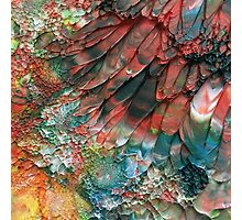 Red Parrot Photographic Print